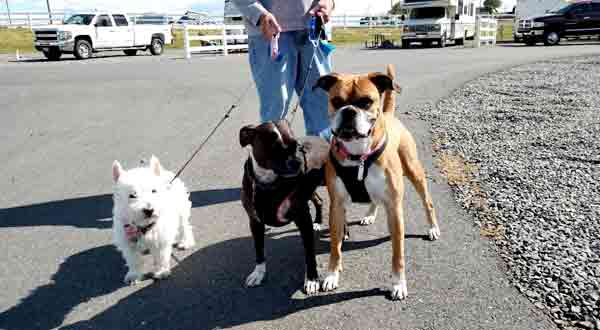 8 RV Travel With Pets Tips