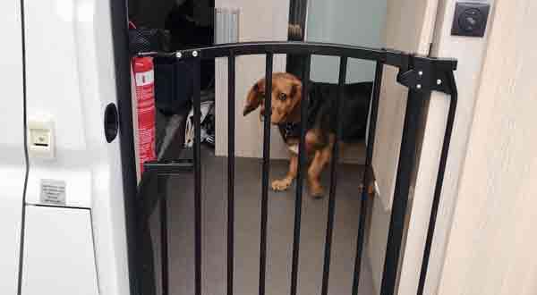 Install Pet Gates