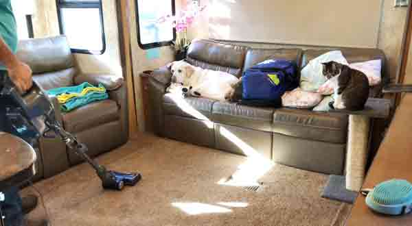 12 Factors About How To Clean RV Carpet