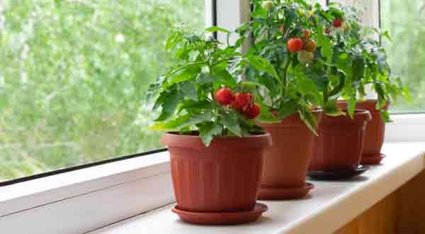 Gardening In Your RV