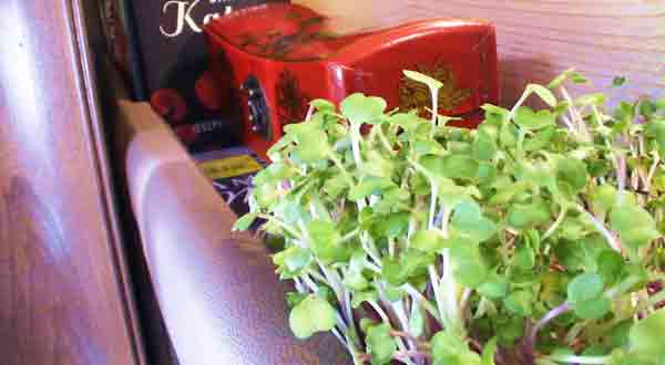 How To Build An Indoor Herb Garden For Your RV